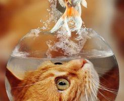 金魚 猫 食べる 同居