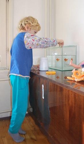金魚 メダカ 強い 飼いやすい どっち