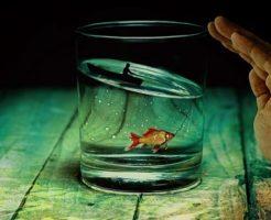 金魚 冬眠 時期