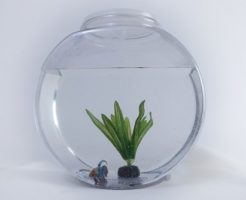 金魚 飼い方 金魚鉢