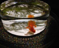 金魚 目 血 原因 対策