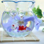 ピンポンパールの金魚鉢での飼育方法について