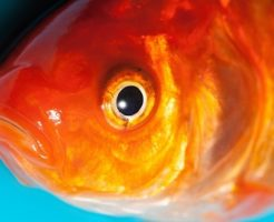 金魚 病気 塩 量 種類 やり方