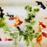 金魚のケンカについて。金魚が出目金をいじめる時の対策方法