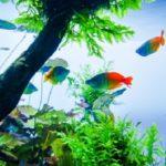 白点病の薬でも金魚の斑点が治らない原因は何?